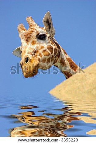 A digital composite of a curious giraffe peeking from behind a rock reflected in rippling water.