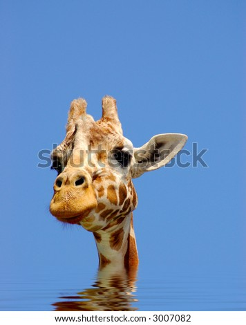 A digital composite of giraffe in water, symbolizing effects of global warming.