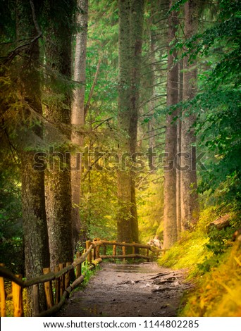 A dirt path in a small ravine of autumn forest, in a warm sunny day, landscape