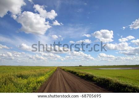 A dirt road cuts through green crop land under a dramatic prairie sky in Saskatchewan Canada