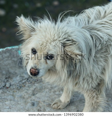 A dirty pet dog on the streets on India