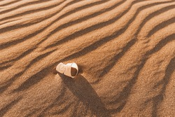A discarded plastic cup lies on a sand dune in the desert. The concept of environmental problems and biodegradable chemical materials