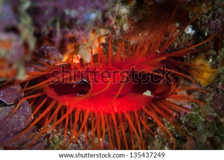 A DIsco clam (Ctenoides ales) has a mantle that is iridescent.  The animal furls and unfurls the reflective parts of its mantle causing what looks like bioluminescence.