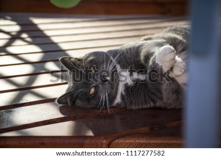 A disgruntled cat lies on one side and crosses his arms