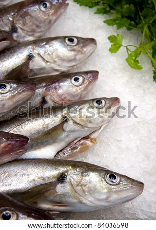 A display of fish on ice at a French fish market