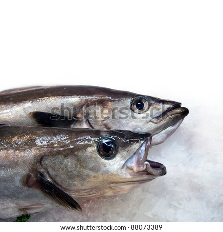 A display of fish on ice at a French fish market. Space for your text - stock photo