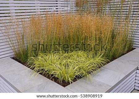 A display of grasses in a contemporary raised bed