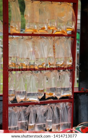 A Display of Live Goldfish in Bags as Fun Fair Prizes. #1414713077