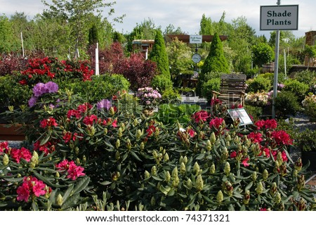 A display of rhododendron blooming in a garden center
