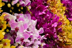 A display of yellow, lilac and purple orchids at the 2017 International Flower Show in Dalat, Vietnam