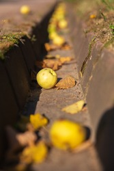 A ditch in a city Park filled with yellow leaves and yellow apples, selective focus