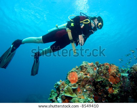 A diver floating over a coral reef in the Caribbean Sea