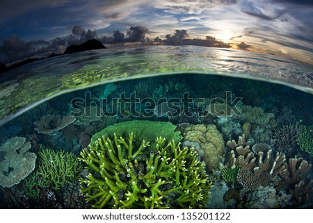 A diverse and healthy coral reef grows in shallow water in Raja Ampat, Indonesia.  This region is known for its spectacular diving and high marine biological diversity.