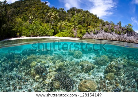 A diversity of reef-building corals, mainly Acropora spp., grow in shallow water not too far from the island of Misool in Raja Ampat, Indonesia.  This area has high marine biodiversity.