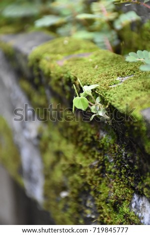 a division of small, simple plants that comprises the mosses and liverworts #719845777