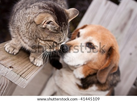 A dog and cat getting friendly with each other.