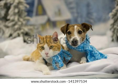 Grey kitten in snow, by Artem Karpukhin, | Grey - Animals ...  |Winter Scenes With Cats