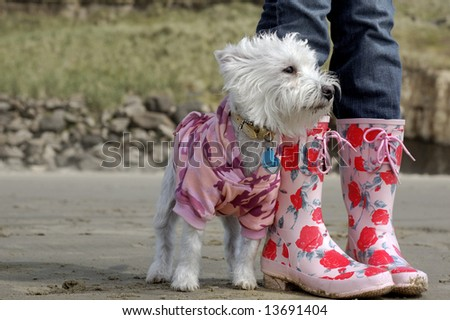 A dog and her owner - stock photo