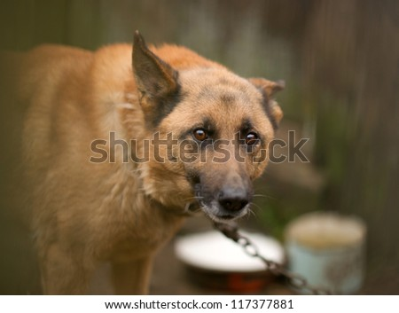 A dog behind the fence
