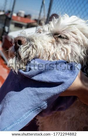 a dog enjoying being dried