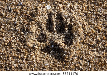 a dog footprints in the sand
