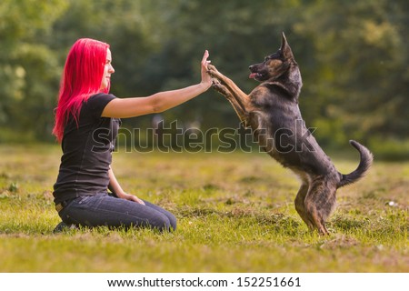 A dog giving a paw or high-five