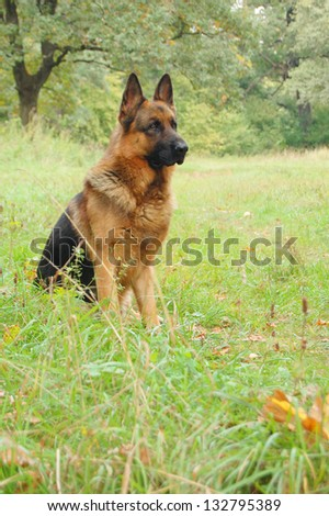 A dog in autumn forest. A dog silhouette on autumn background.