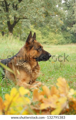 A dog in autumn forest. A dog silhouette on autumn background. the dog profile