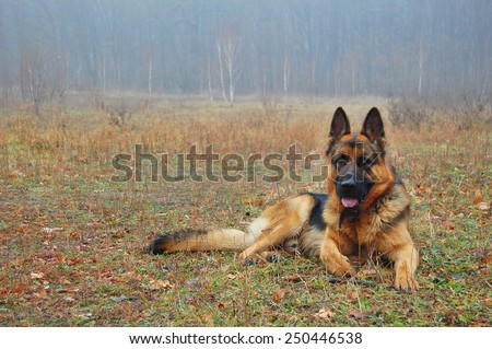 A dog in autumn forest. A dog silhouette on autumn leaves background.