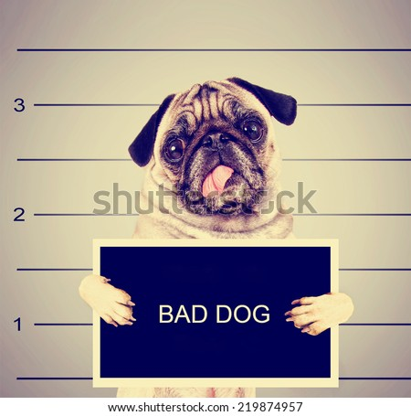 a dog in front of a convict...