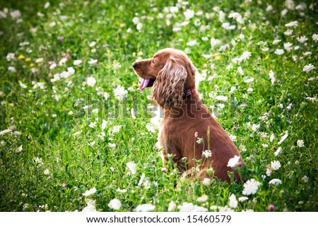 A dog in the grass