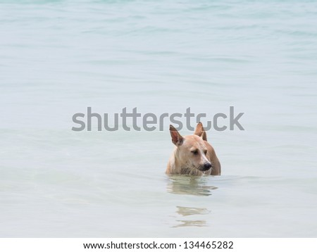 A dog in the sea