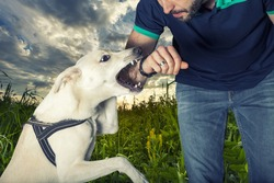 A dog is going to bite an arm of a man. A vicious dog is going to bite a man in a natural park. Sunset with sky and clouds in the background