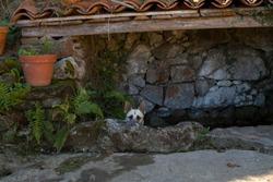 A dog is hidden
