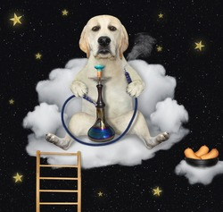 A dog is sitting on a cloud armchair and smoking a hookah at night.