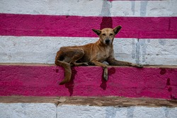 a dog is sitting on the colorful stairs of varanasi ghat.