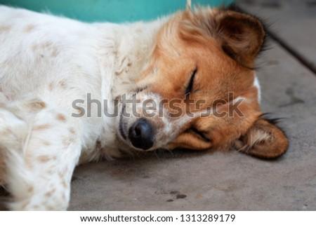 A dog is sleeping #1313289179