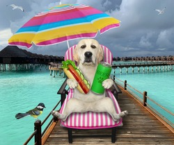A dog labrador on a beach chair is drinking beer and eating a hot dog under an umbrella on the wooden pier in the maldives.