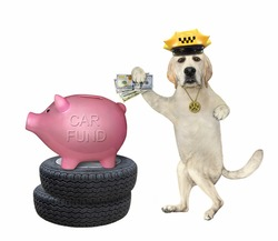 A dog labrador taxi driver in a yellow cap puts money in a piggy bank for a new car. White background. Isolated.