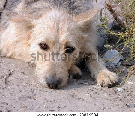 A dog laying down on cement, looking at the camera.