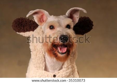 a dog look at me