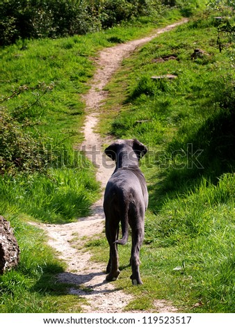 A dog looks away into the distance along a path.