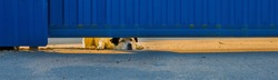 a dog peeps out from under a blue iron fence