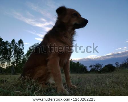 A dog running in a beautiful blue sky farm background #1263282223