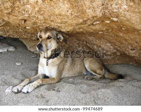 A dog seating on the sand gazing