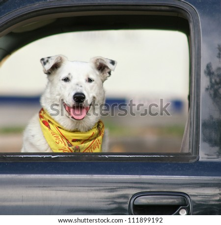a dog sitting in a car waiting