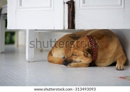 A dog sleep under the cabinet