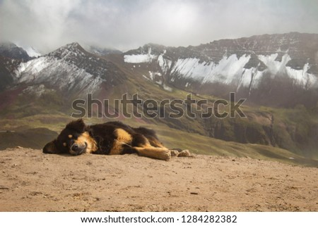 A dog sleeping during the trekking to the Rainbow Mountain, Perù #1284282382