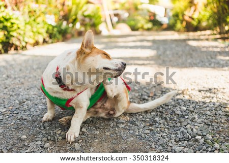 a dog try to scratching its skin. #350318324