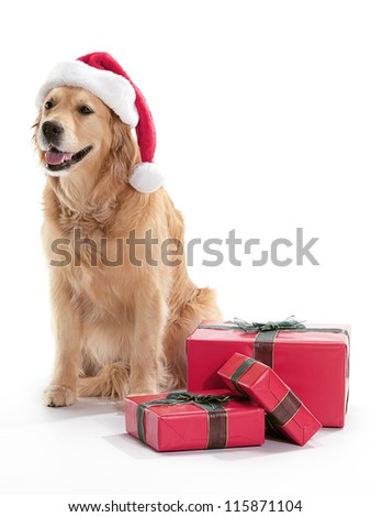 A dog wearing a Santa hat, surrounded by Christmas presents on a white background.